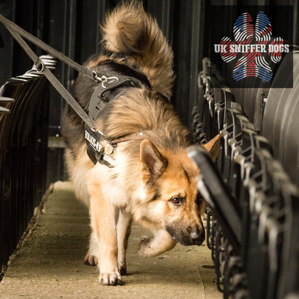 Sniffer Dogs 6 week course