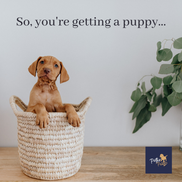 So you are getting a puppy